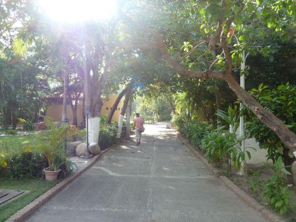 Path on Isla Rio Cuale