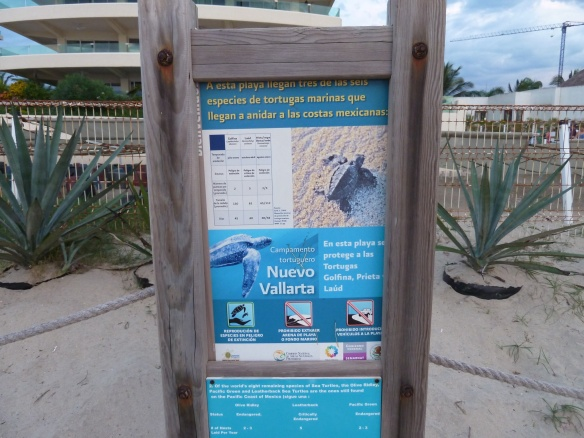 Information sign about the turtles.